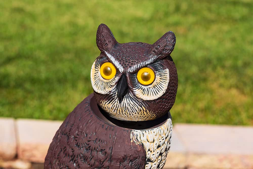 An owl decoy used to keep birds from eating grass seed