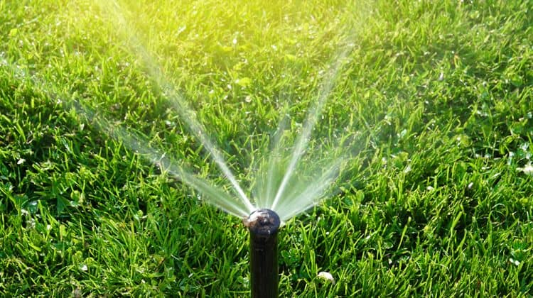 An activated sprinkler watering a lawn the right way to prevent weeds and other unwanted plants