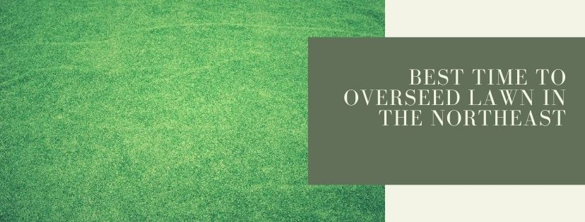 Tips and helpful information to learn the best time to overseed lawn in the northeast.