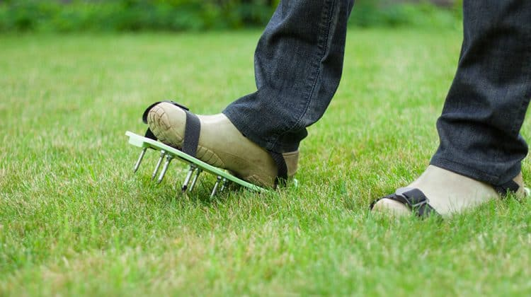 Shot of man's feet aerating lawn with aerator shoe attachments
