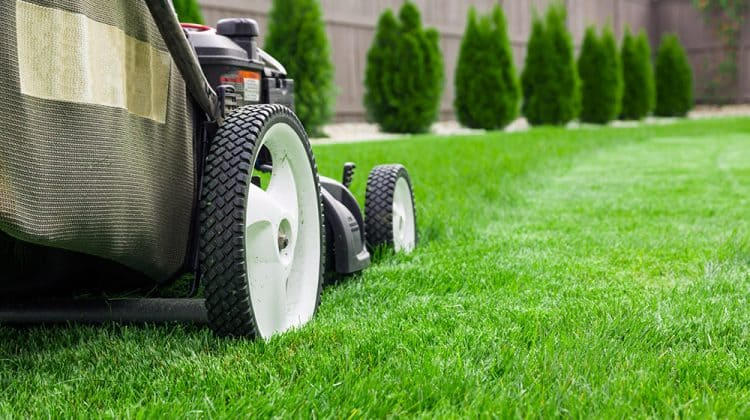 Close up shot of push lawn mower mowing grass