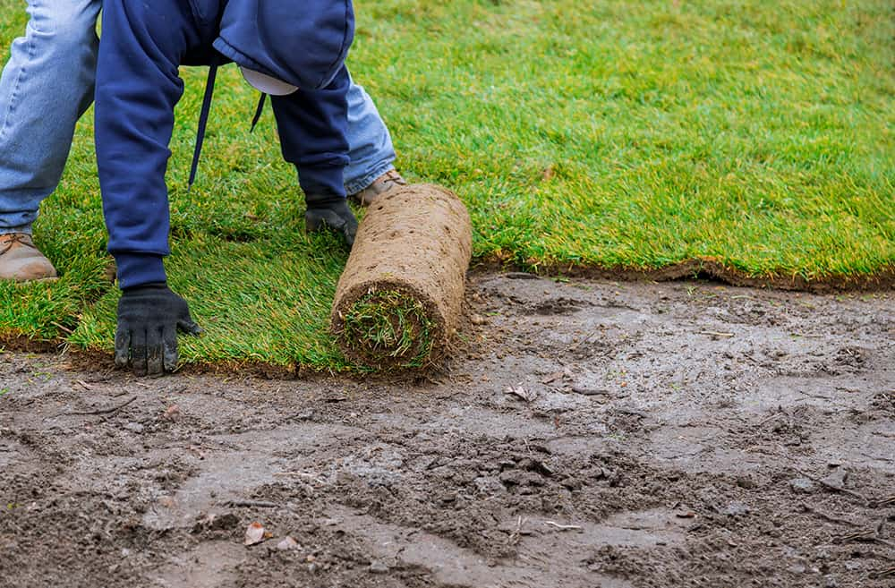 Can you lay sod over weeds?