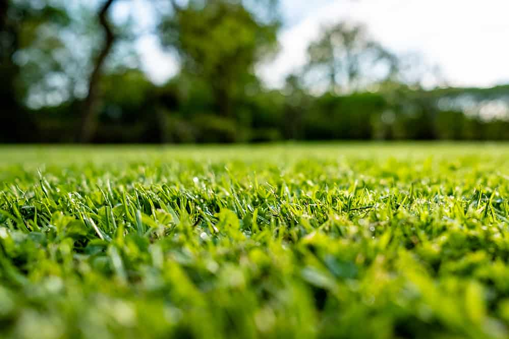 A freshly cut lawn that used lime throughout the season