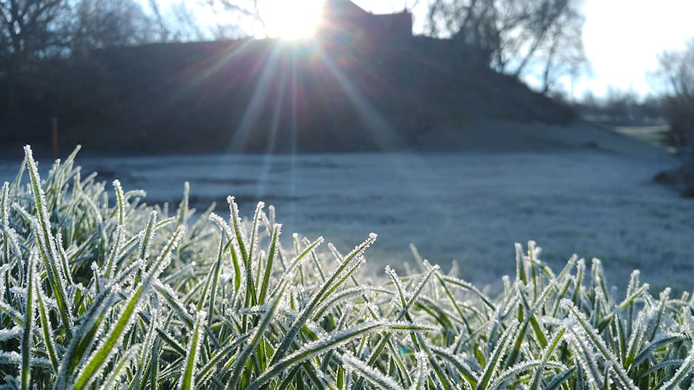 Frost on a lawn with long grass