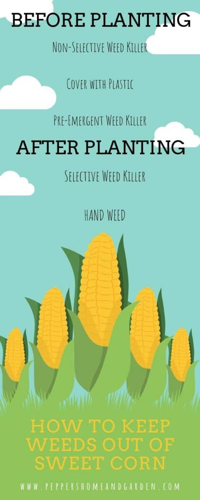5 Best Tips on How to Keep Weeds Out of Sweet Corn both Before and After Planting Your Harvest