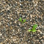 How to stop weeds from growing through pebbles