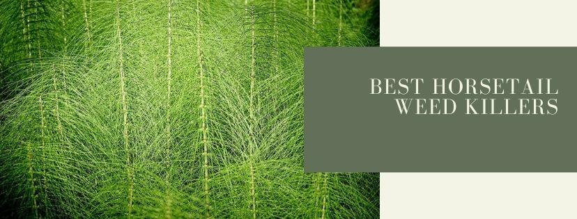 Best horsetail weed killers