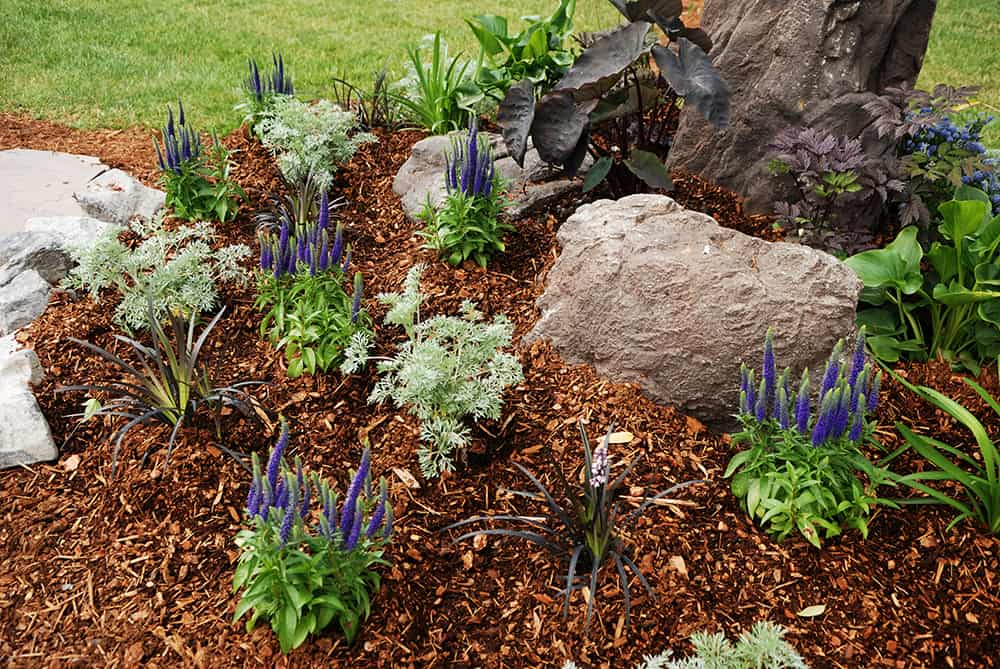 Can you fertilize on top of mulch?