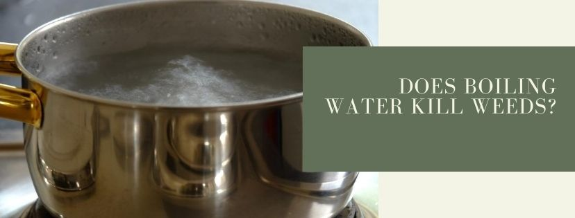 Does boiling water kill weeds?