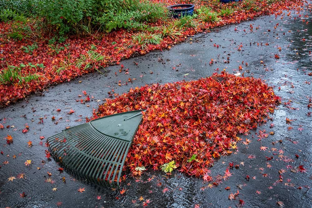 A large green rake used to create a pile of wet leaves on a driveway