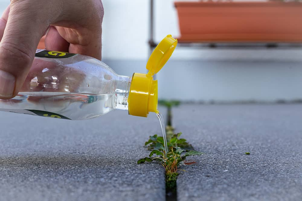Does vinegar kill weeds to the root?