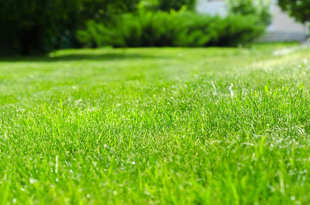 When to apply pre-emergent weed killer