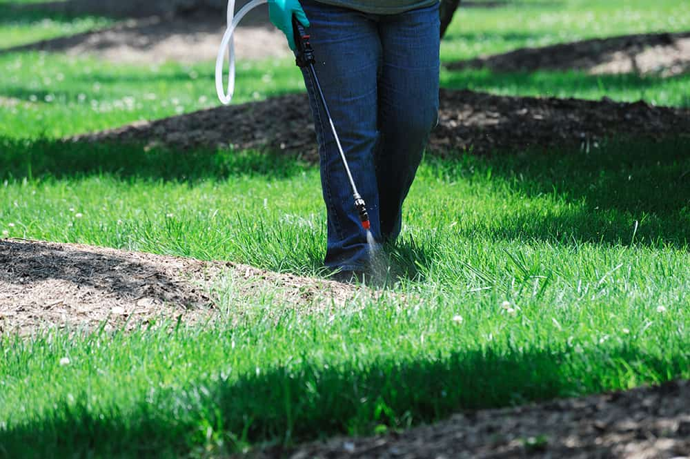 Man spraying pre-emergent weed killer on a lush green lawn to prevent weeds from growing