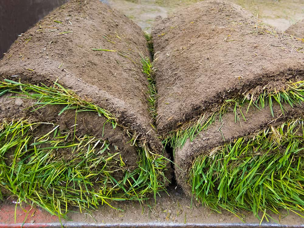Rolled up sod after being cut with a sod cutter