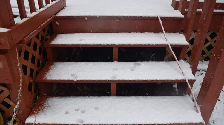 A set of snowy wooden steps