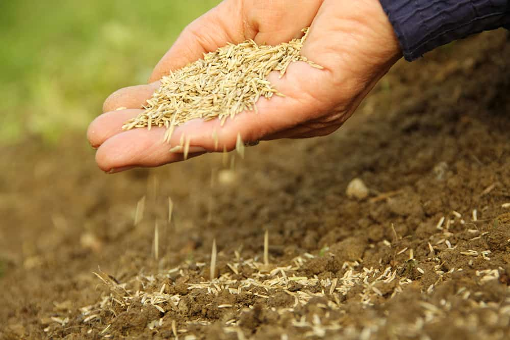 What is the Best Temperature to Plant Grass Seed?
