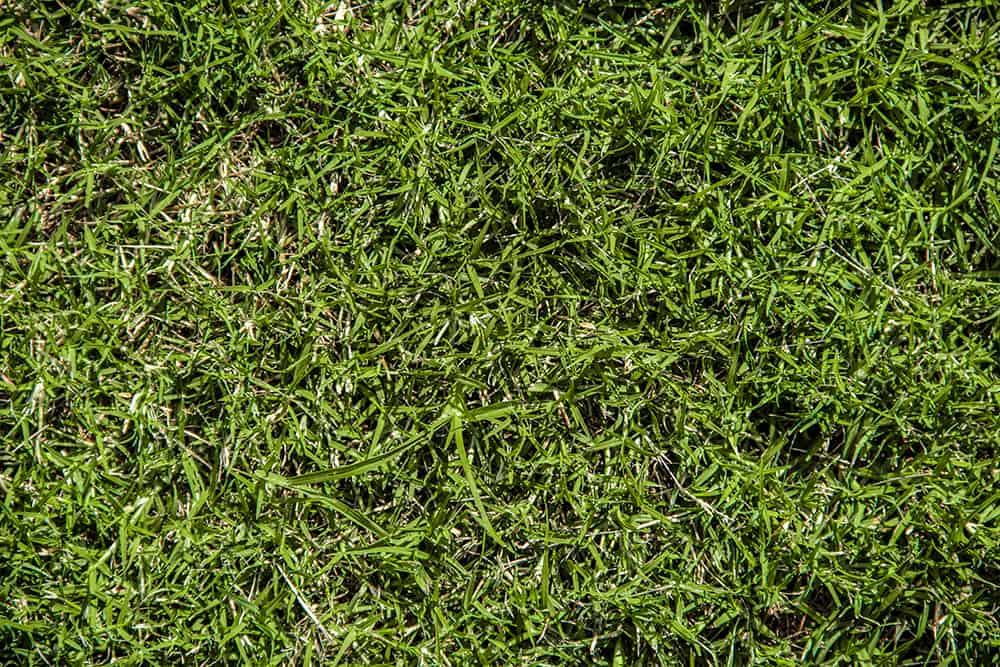When does bermuda grass go dormant?