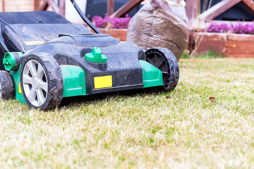 When is the best time to scarify a lawn?