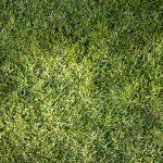 When to scalp bermuda grass