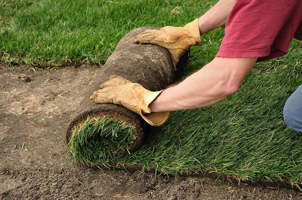 How long does it take to lay sod?
