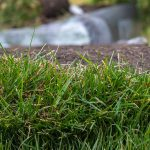 How to get rid of old sod