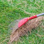 How to get rid of pine needles