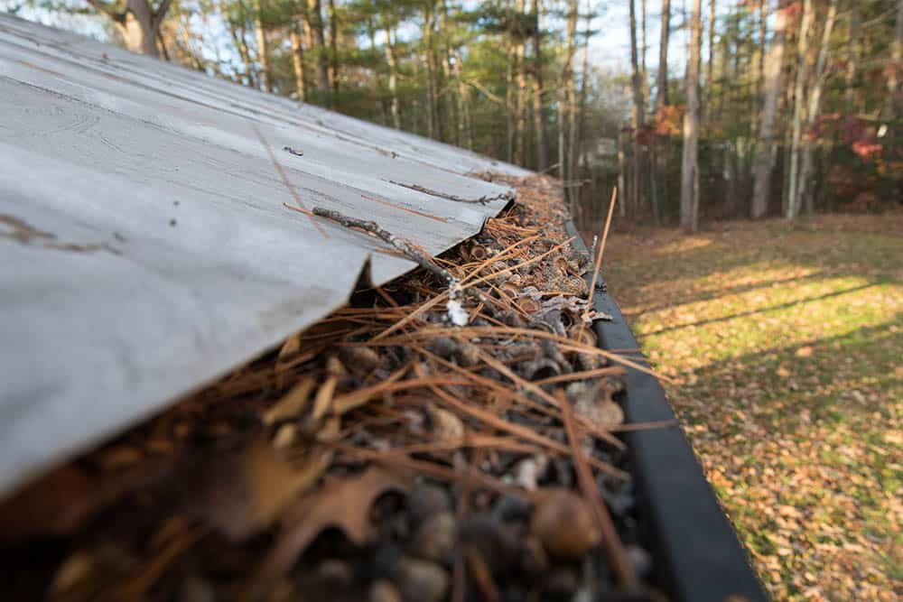 How to keep pine needles out of gutters