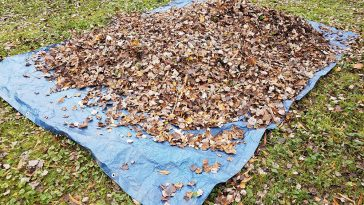 How to use a tarp to collect leaves