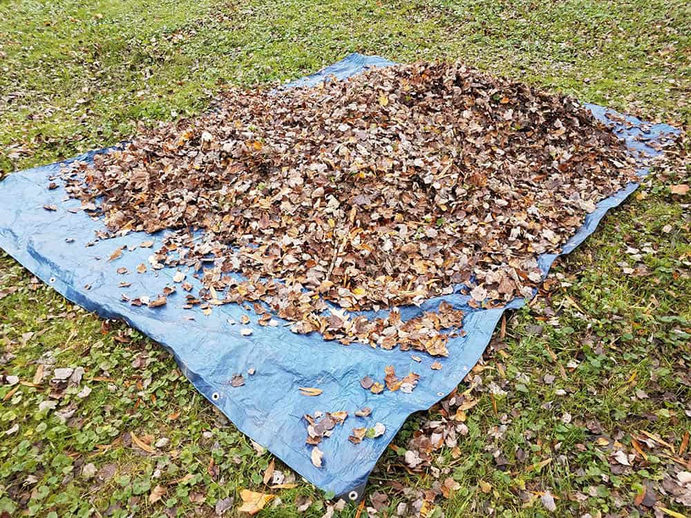 How to use a tarp for leaves