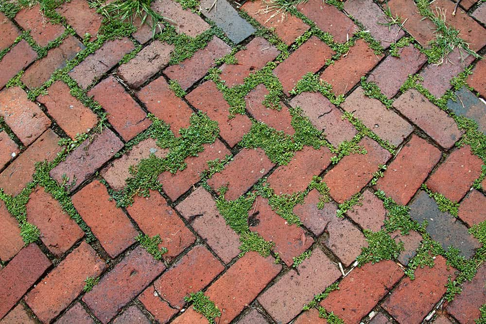 Weeds that need to be killed growing between interlocking brick pavers