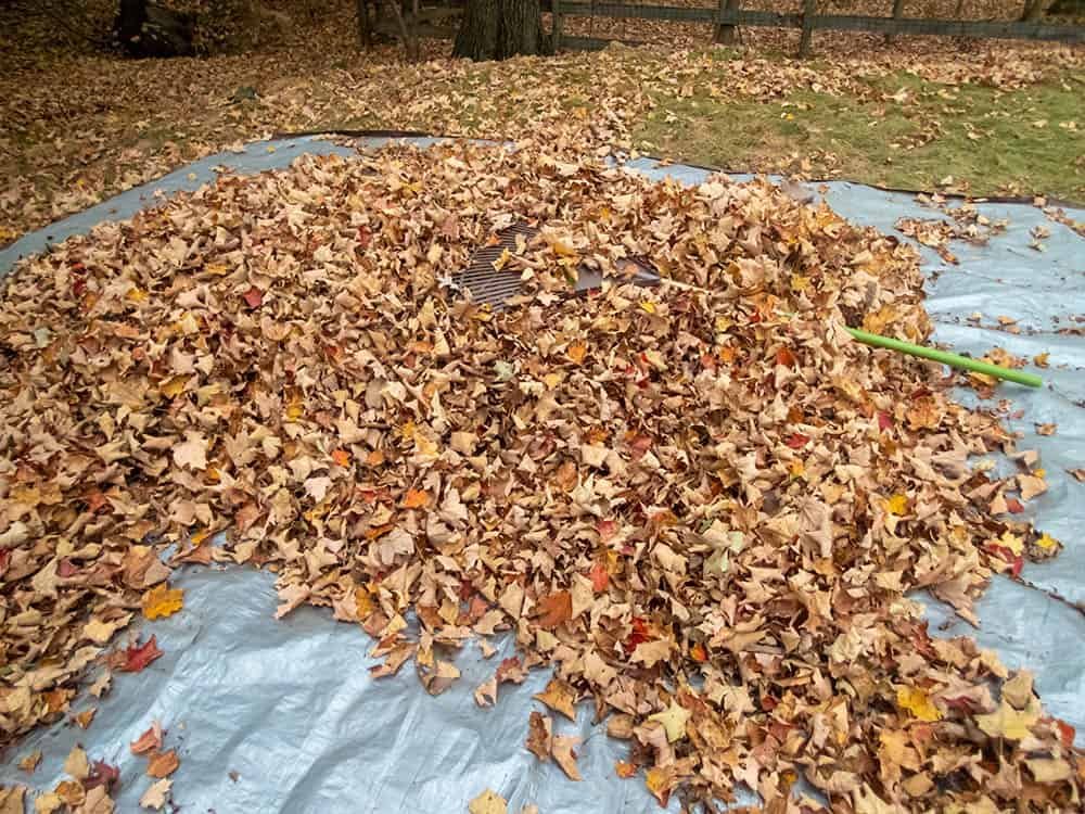 Large tarp for moving leaves during the fall