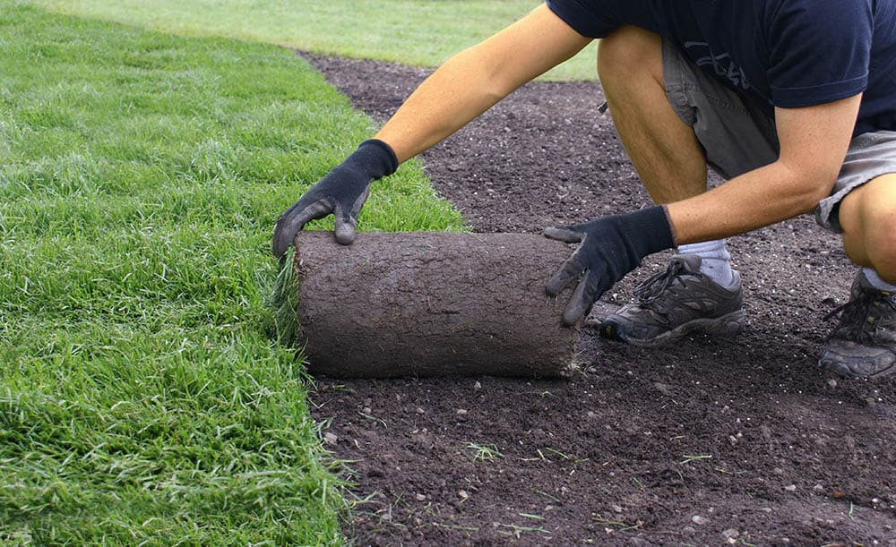 Man laying down sod in one day
