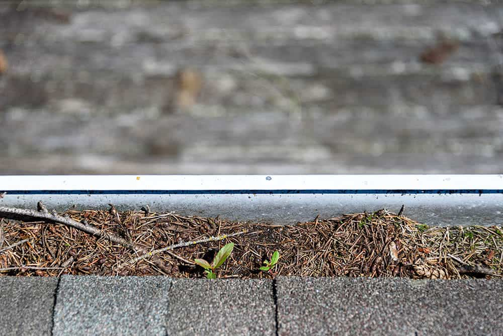 Pine needles and other debris stuck in a gutter