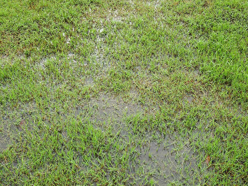 Standing water left flooding the grass of a lawn