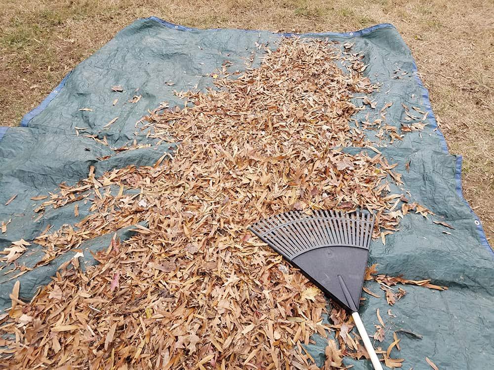 Using a tarp for raking leaves