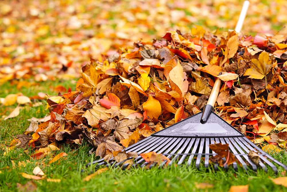 What happens if you don't rake your leaves?