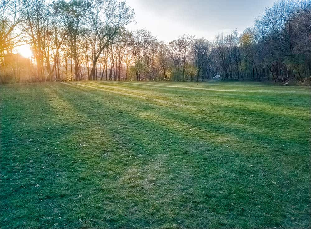 How to keep grass green in winter