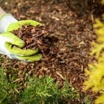 How to stop weeds from growing in mulch