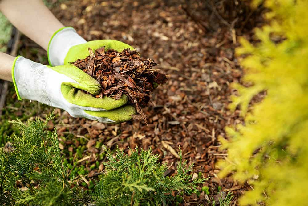 How To Stop Weeds From Growing In Mulch [9 Fast And Effective Tips]    Pepper's Home & Garden