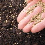 Planting grass seed in winter