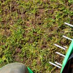 What to do after aerating your lawn