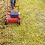 When to dethatch Bermuda grass