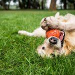 Is Milorganite safe for pets?