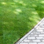 When can you mow new sod?
