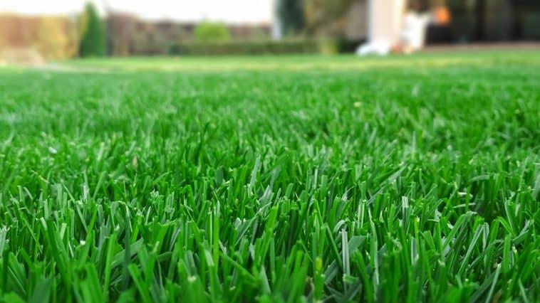 When to aerate Bermuda grass