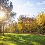 When to aerate lawn in Minnesota