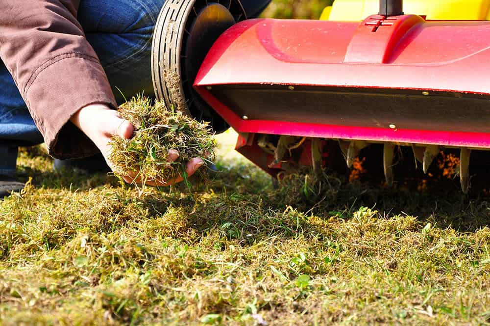 When to aerate lawn in Texas