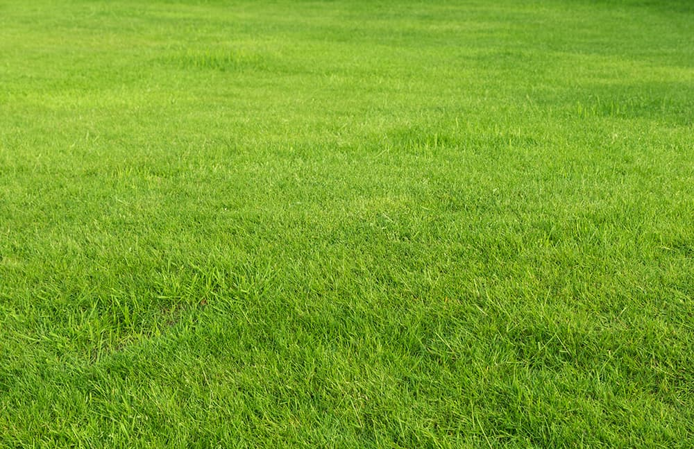 When to plant Buffalo grass seed in Texas