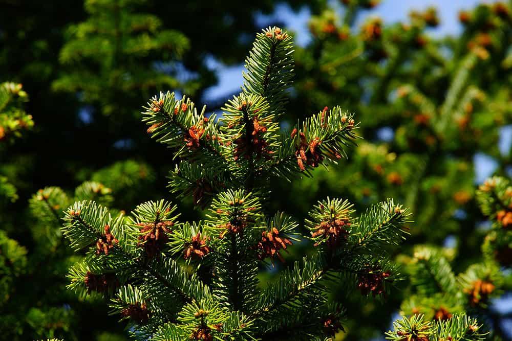 Will 2,4-D kill trees?
