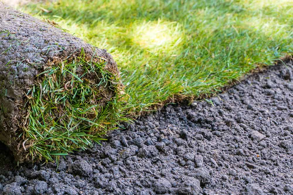 Can you use pre-emergent on new sod?